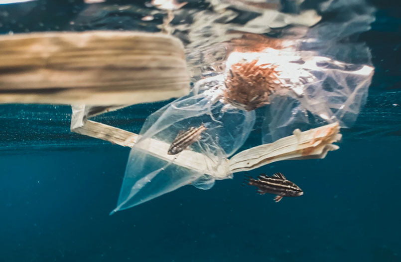 Tackling Our Plastic Issue Starts With the Bag